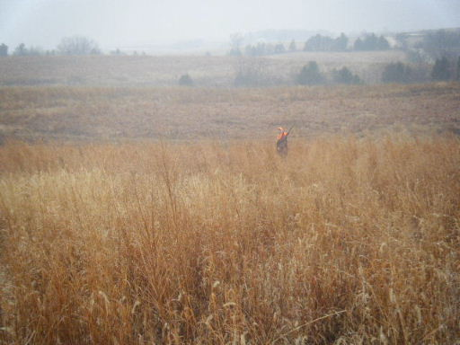 Iowa Prairie & Grasslands Project at Brush Dale Hunting Preserve