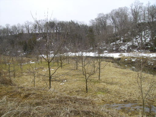 Reforestation Project at Brush Dale Hunting Preserve